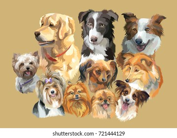 Set of colorful vector portraits of dog breeds ( retriever, border collie; toy Terrier, papillon, Sheltie,Yorkshire Terrier, Biewer terrier, small pomeranian, Pekingese) isolated on beige background
