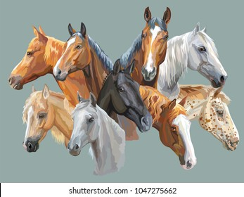 Set of colorful vector portraits of horses breeds (Trakehner horse, Welsh Pony, Orlov Trotter, Arabian horse, Appaloosa horse) isolated on grey background