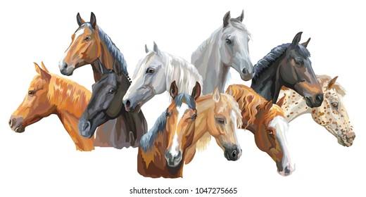 Set of colorful vector portraits of horses breeds (Trakehner horse, Welsh Pony, Orlov Trotter, Arabian horse, Appaloosa horse) isolated on white background