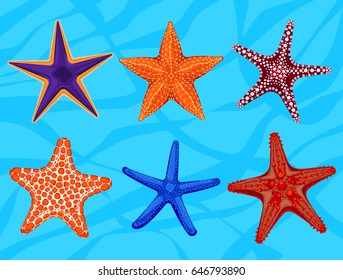 Set of colourful realistic starfishes, underwater invertebrate animal. Vector illustration. Different kinds of beautiful sea stars icons used as summer design elements for label, card or banner.