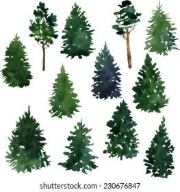 set of conifer trees drawing by watercolor, vector illustration