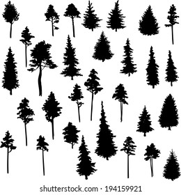 set of conifer trees, nature design element, vector illustration