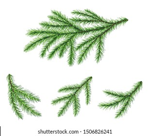 Set of coniferous Christmas tree branches. Fir branches for festive design