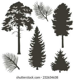 Set of coniferous trees silhouettes. Vector