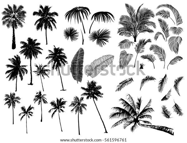 Комплект конструктора из реалистичных черных силуэтов изолированных тропических пальм, ветки и отдельные банановые листья, талипот на белом фоне.