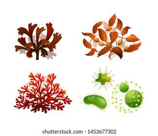 Set coral seaweed underwater marine flora. Marine aquarium flora differents seaweeds red algae, brown algae Sargassum, phytoplankton tropical sea plant elements silhouette vector illustration