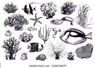 Set of corals and coral fish inhabitants. 21 unique hand drawn elements. Vector collection
