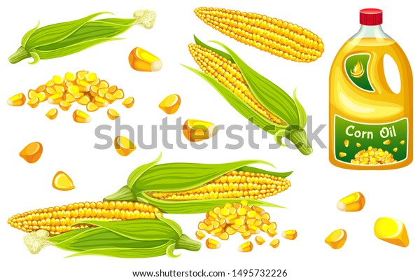 Set corn oil, seed and leaf. Isolated vector illustration on white background.