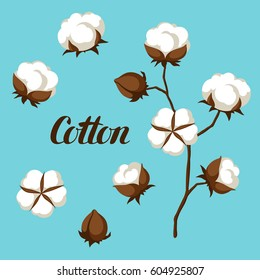 Set of cotton flower buds, bolls and branch.