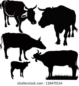 set cow animals isolated white background