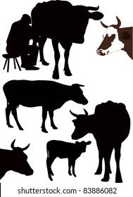 set cow isolated white background