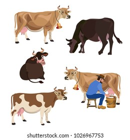 Set of cows of different breeds. Vector illustration isolated on white background
