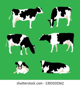 Set of cows in different poses isolated on green (any) background. Cow standing, walking, grazing and resting. Vector illustration