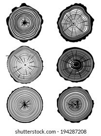 Set of cross section of the trunk, vector illustration