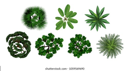 set of crown of various trees with lush foliage