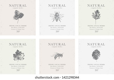 Set of customizable labels of Natural organic herbal products. Vintage packaging design collection for Cosmetics, Pharmacy, healthy food. Dried leaves, real herbarium package templates