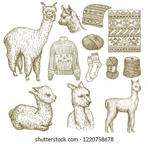 Set of cute Alpaca Llamas. Animals in Peru for cards, posters, invitations, t-shirts. Hand drawn Elements. Engraved sketch. black and white isolated Alpaca vector art. Alpaca wool and knitwear from it