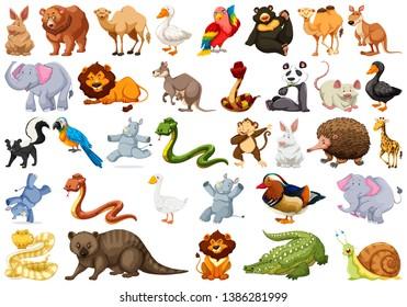 Set of cute animal illustration