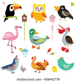 A set of cute bird vector illustrations, various types of wildfowl and poultry: toucan, owl, flamingo, duck, pelican, quail, crow, turkey, chicken. Birds' collection