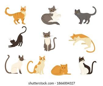 Set of cute cartoon animal design white brown and orange domestic cat adorable animal flat vector illustration