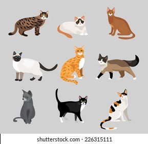Set of cute cartoon kitties or cats with different colored fur and markings standing  sitting or walking  vector illustrations on grey