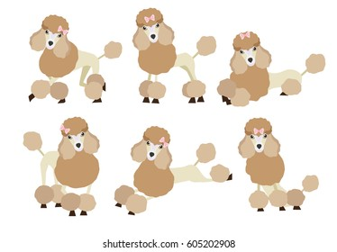 Set of cute cartoon Poodle dog in modern flat style. Animal character design isolate background.