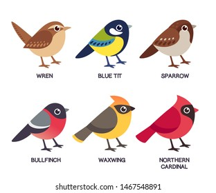 Set of cute cartoon small birds: Cedar Waxwing, Northern Cardinal, common Sparrow, Wren, Blue Tit and Bullfinch. Simple drawing style, isolated clip art vector illustration.