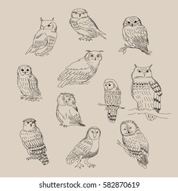 A set of a cute different species of owls