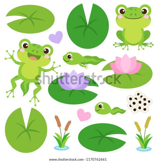 Набор милых лягушек. Яичные массы, головастик, лягушка, лягушка, сердца, растения, листья водяной лилии и цветок. Жизненный цикл лягушки. Векторная иллюстрация.