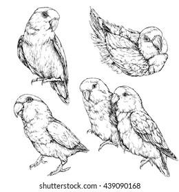 Lovebirds Drawing Images Stock Photos Vectors Shutterstock