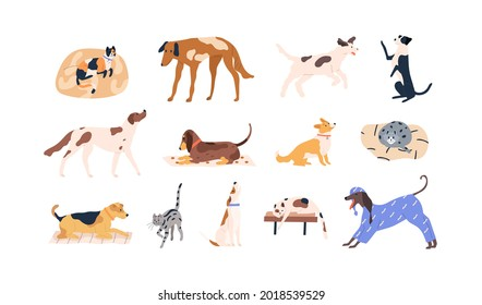 Set of cute pets. Adorable cats, dogs of different breeds. Collection of funny feline and canine animals. Colored flat vector illustration of kitties and doggies isolated on white background
