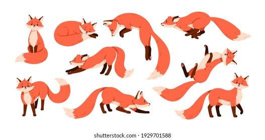 Set of cute red foxes with black paws isolated on white background. Happy funny forest animal running, sitting, hunting, sniffing, sleeping, relaxing and stretching. Colored flat vector illustration