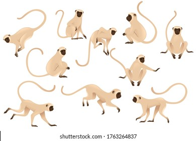 Set of cute vervet monkey beige monkey with brown face cartoon animal design flat vector illustration isolated on white background