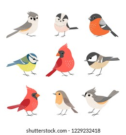 Set of cute winter birds isolated on white background
