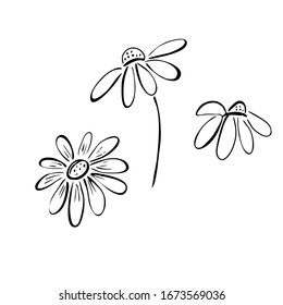 Set of daisy flowers in doodle style. sketch in black lines. Vector illustration isolated on white background.