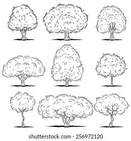 Set of deciduous trees. Line art