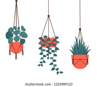 Set of decorative hanging houseplants isolated on white background. Bundle of trendy macrame hangers for plants growing in pots (pilea, string of pearls, planthanger) Cartoon flat vector illustration.