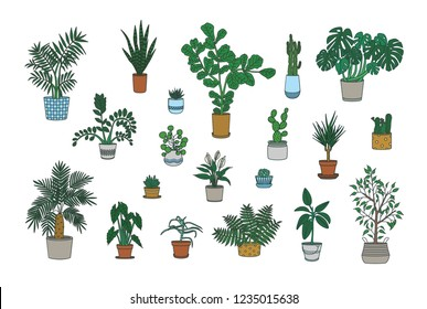 Set of decorative houseplants growing in planters isolated on white background. Bundle of trendy potted plants. Collection of gorgeous natural home decorations. Colorful vector illustration.