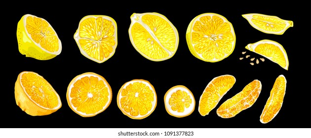 Set with decorative realistic vector design drawing citrus fruit elements of lemon and orange. There are halves, circle shape slices, long size orange slices and carved lemon slices, and seeds.