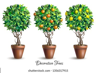 Set of decorative trees in pots on white background. Lime tree. Lemon tree. Orange tree. Houseplant. Vector illustration.