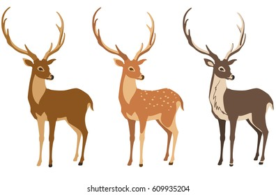A set of deer for your design. Deer, sika deer and reindeer. Vector illustration, isolation objects.