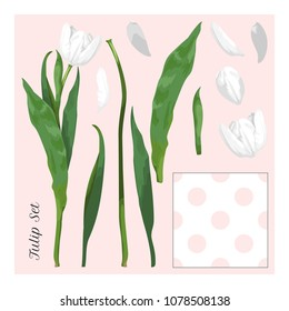 Set for design. Disassembled white tulip flower. Petals, stem and leaves. Seamless background with polka dots.