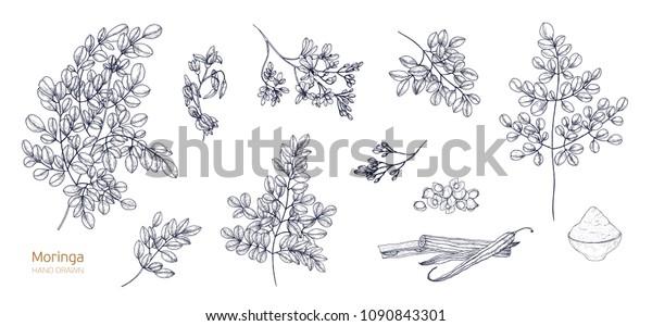 Image Vectorielle De Stock De Ensemble De Dessins Botaniques