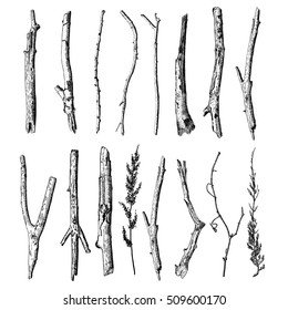 Set of detailed and precise ink drawing of wood twigs, forest collection, natural tree branches, sticks, hand drawn driftwoods forest pickups bundle. Rustic design, classic drawing elements. Vector.