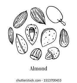 Set of different almonds. Hand drawn outline vector sketch illustration. Black on white background