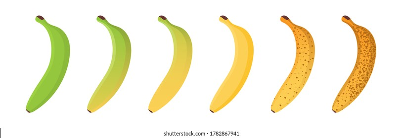Set of different banana ripeness chart isolated on white background.  Concept stages of growth and ripening fruit. Cartoon vector illustration.