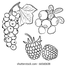 A set of different berries on a white background.