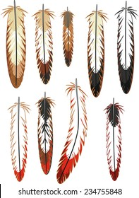 Set of different bird feathers