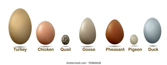 set of different birds eggs with insctiption, turkey, duck, goose, chicken, pigeon, quail, pheasant eggs, vector