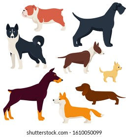 Set of different breeds dogs. Purebred dogs. Corgi, Doberman, Dachshund, Laika, etc. Flat vector illustration on white